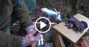 Conservation-Dept-Tackles-Rat-Plagues