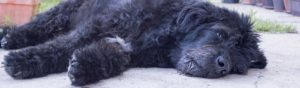 Dogs poisoned by 1080