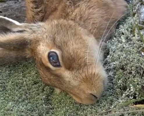 New Zealand poisoned wildlife