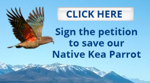 homepage-link-petition