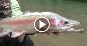 Mass-Trout-Poisoning-in-New-Zealand-by-1080